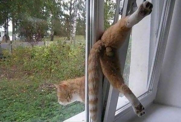 【爆笑】後悔極まりない? ネコの辞めときゃよかったと思う瞬間 写真20選|ペットフィルム -犬・猫・ペットの画像・動画まとめ petfilm.biz