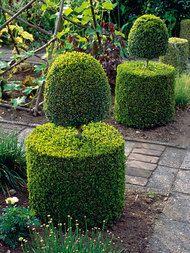Buchsbaum schneiden - Das Manufactum Gartenjahr