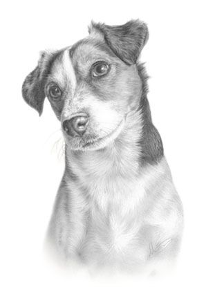 Jack Russell Terrier Fine Art Dog Drawing Animal Print