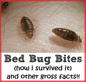 A victim offers her experience and advice about bed bug bites after being bitten by these parasitic insects. http://www.mommyedition.com/bed-bug-bites-how-i-survived-it-and-other-gross-facts