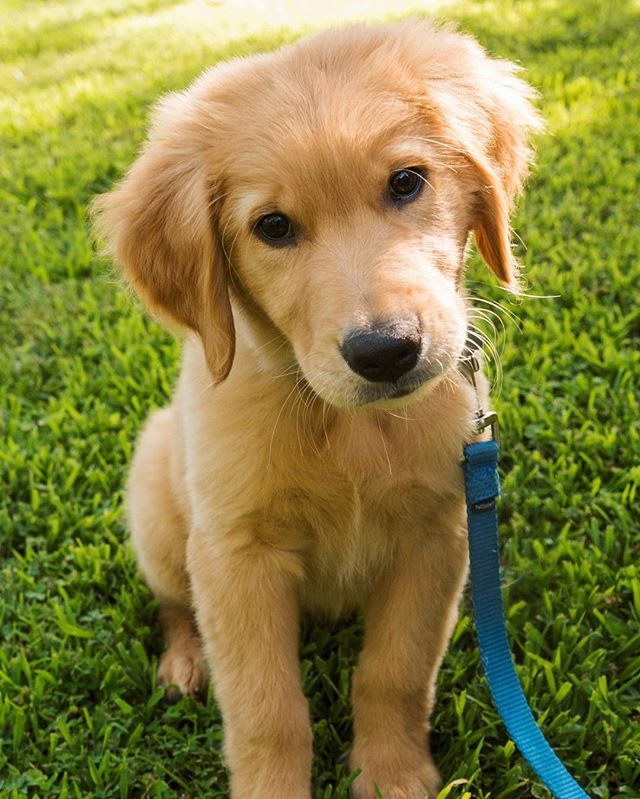 """Miles  Hope you're doing well.From your friends at phoenix dog in home dog training""""k9katelynn"""" see more about Scottsdale dog training at k9katelynn.com! Pinterest with over 20,800 followers! Google plus with over 180,000 views! You tube with over 500 videos and 60,000 views!! LinkedIn over 9,300 associates! Proudly Serving the valley for 11 plus years! Can now check us out on instantgram! K9katelynn"""