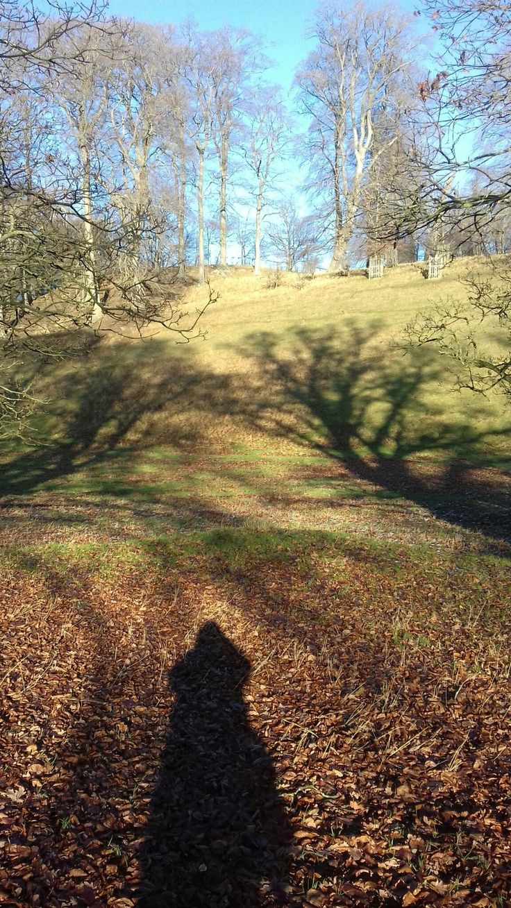 Blenheim Palace Park 281217 it was a beautiful sunny wintery day