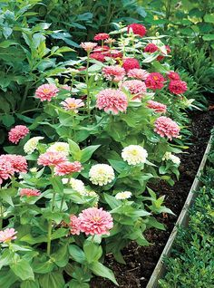 Plan and plant a cutting garden. (Comes in handy for all occasions... or just for extra color in all rooms of the house).