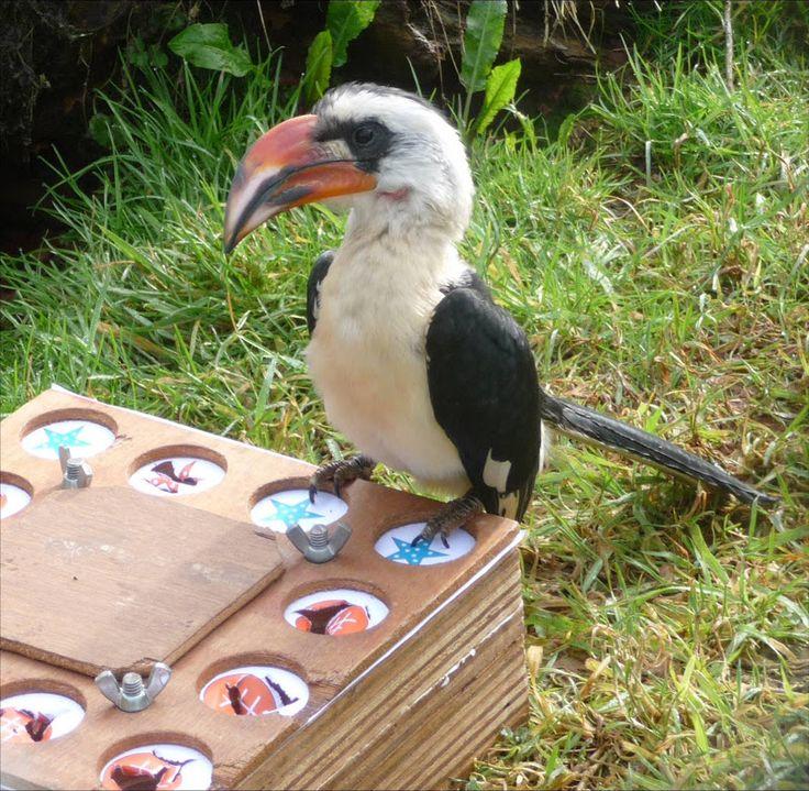 Bird Enrichment Toys : Images about enrichment ideas on pinterest bird