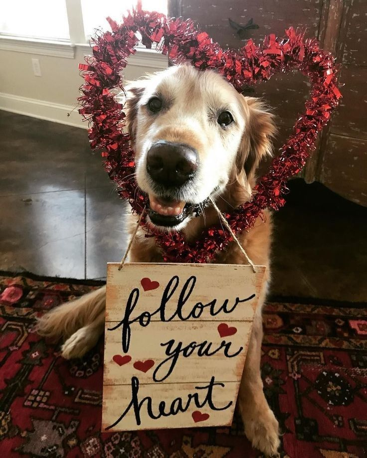 Pin By Bobbie Burns On Nursing Home Jokes Dog Valentines Cute Dog Photos Happy Animals