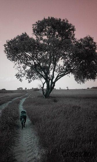 on a walk...