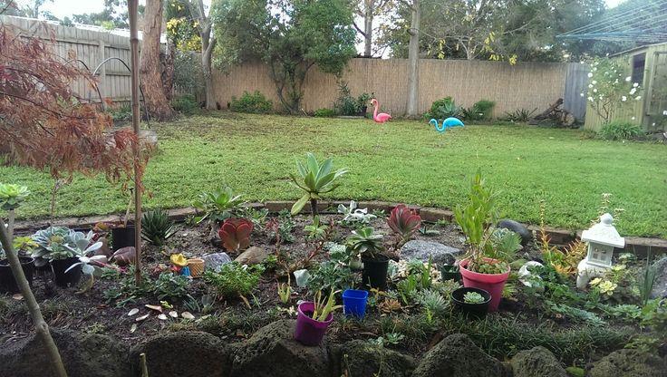 Succulent garden and my favourite Garden Flamingos!
