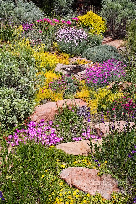 Charles Mann made a small but colorful rock garden in Santa Fe, New Mexico…