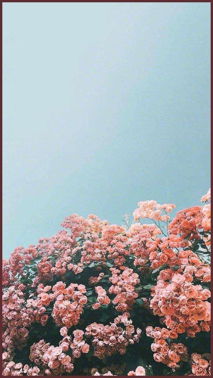 21 Beautiful iPhone wallpaper , iphone background, summer ,flower ...