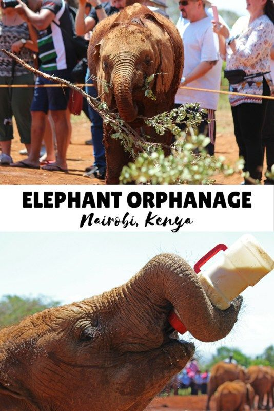 MY FAVOURITE PLACE!!!!!Visiting the Elephant Orphanage in Nairobi, Kenya