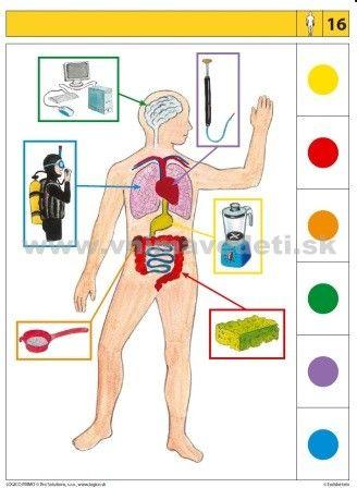 Logico Primo Ľudské telo - autokorektívne karty