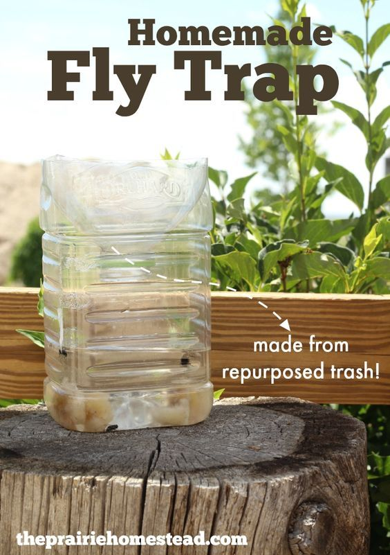 Homemade Fly Trap: made from repurposed trash!