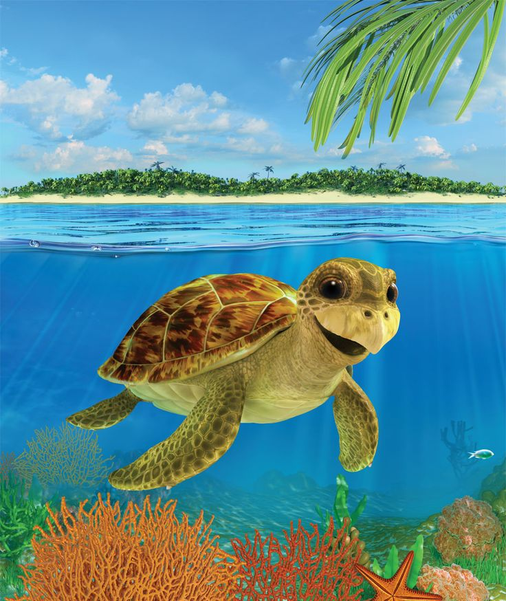 3D illustration of turtle for nature's path canada
