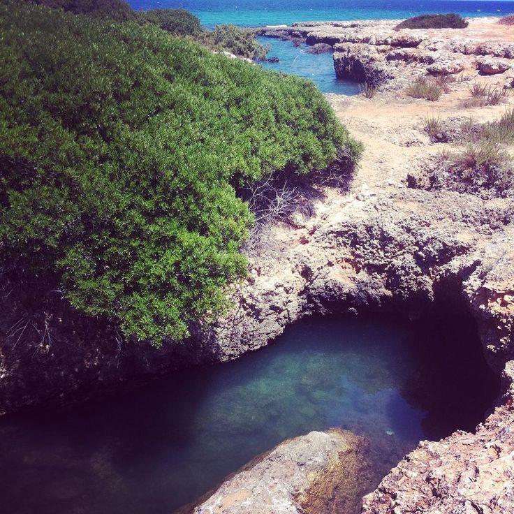 #puglia #holidays #torrepozzelle #ostuni #nature #sea #masseriabellolio #b&b…
