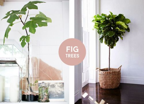How To String Lights On A Ficus Tree : 17 Best images about - Vijgenboom - on Pinterest String lights, Eames and Plants