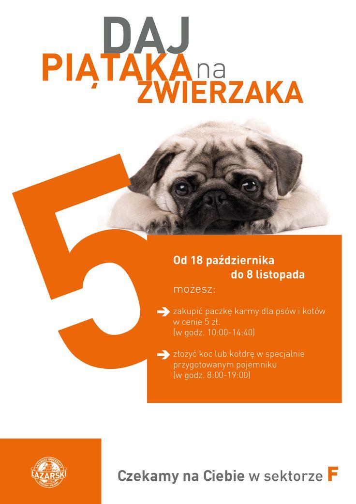 Daj piątaka na zwierzaka!   #lazarski