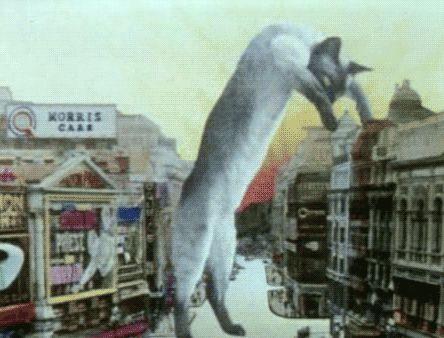 Um gato faminto