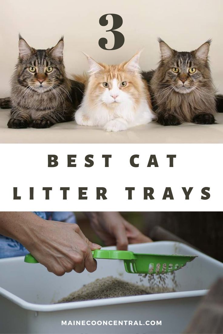 Pin On Cat Litter Box Tips And Products