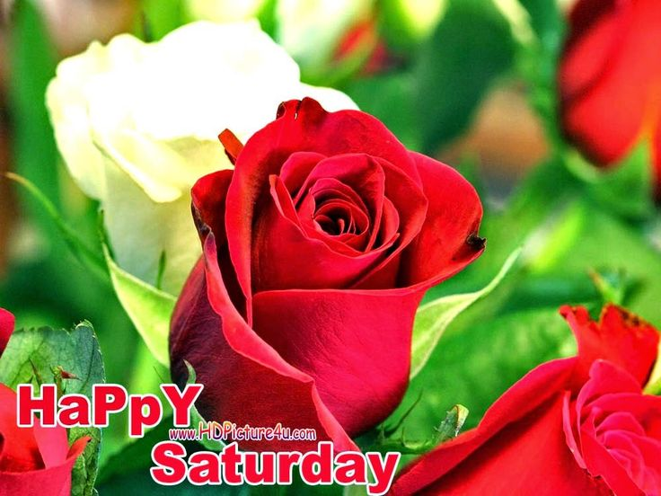 Happy Saturday Images   Free Download Happy Saturday 2015 Images