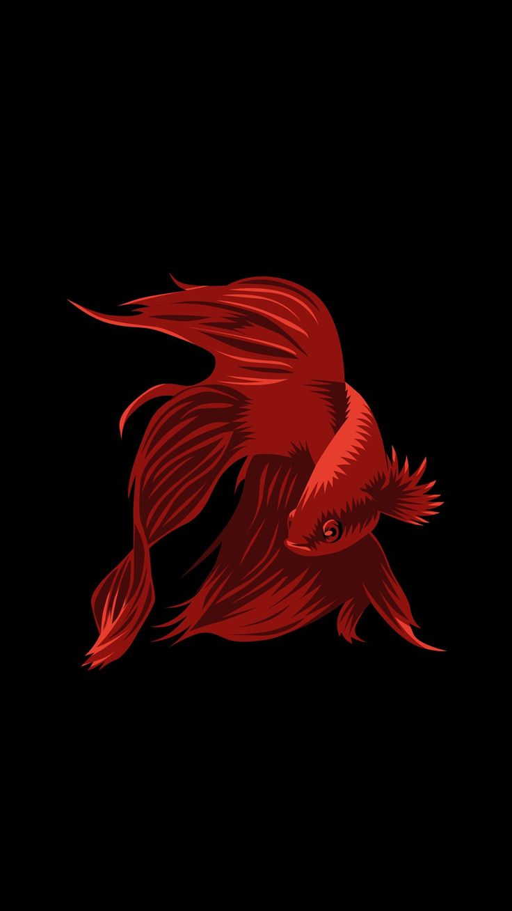 Black background with red fish colours wallpaper - Dark background wallpaper hd ...