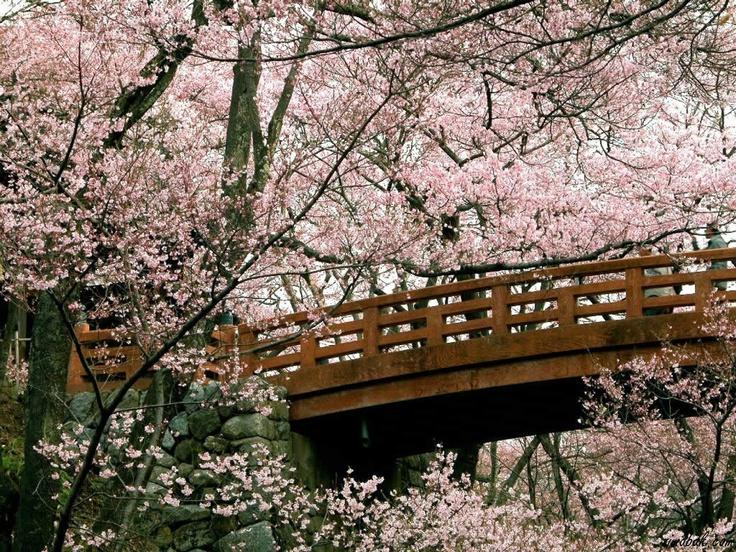 wallpapernarium: Bellos arboles de cerezas de japón