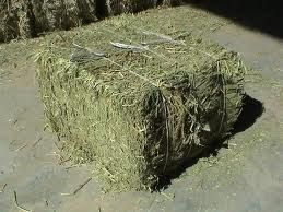 alfalfa hay - a must for both chickens and rabbits!!!