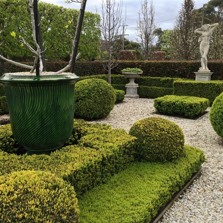 Striated green Anduze urns planted with 'goblet' trained fruiting figs...