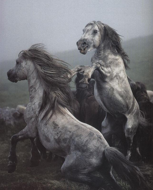 wild horses by david alan harvey