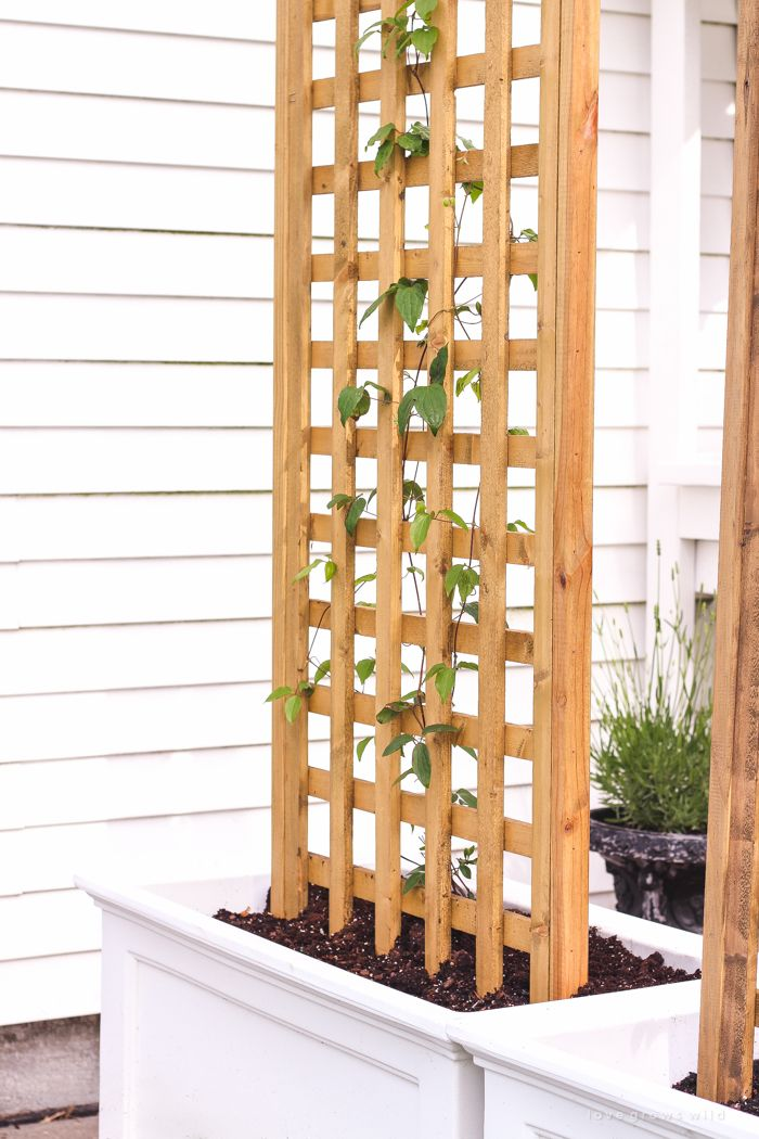 best 25 patio privacy ideas on pinterest backyard privacy outdoor privacy and balcony privacy screen - Small Patio Privacy Ideas