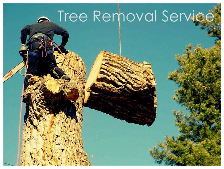 #TreeRemoval Now Made Easier Than Before With The Experts - For more please read our Blog - http://australiantreeservicesbrisbane.wordpress.com/2014/10/26/tree-removal-now-made-easier-than-before-with-the-experts/