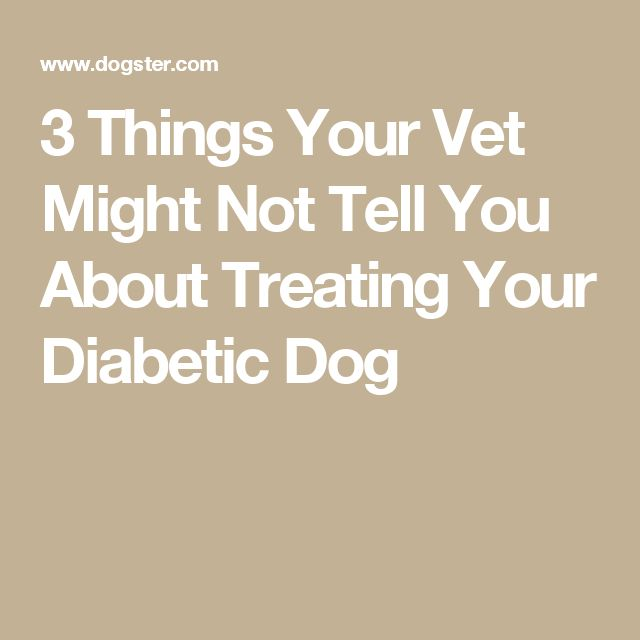 3 Things Your Vet Might Not Tell You About Treating Your Diabetic Dog