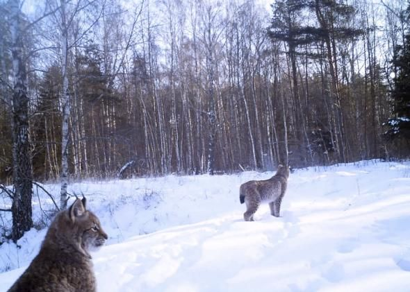36 best wildlife kingdom in chernobyl images on pinterest for Fish mox for humans side effects