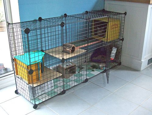 Great idea for rabbit cage.  They sell these cubes in the storage section at Walmart.  you can put them together however you like.