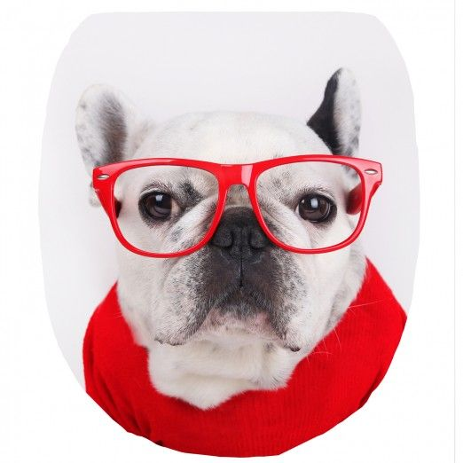 abattant wc chien lunettes chiens et chats pinterest bulldogs. Black Bedroom Furniture Sets. Home Design Ideas