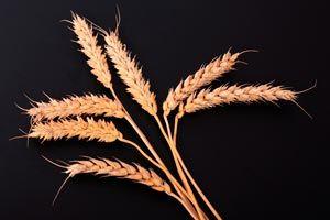 Beneficios de consumir germen de trigo. Propiedades e informaci�n nutricional del germen de trigo. C�mo aprovechar los beneficios del germen de trigo