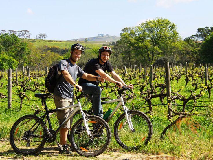 Bouw je eigen Stellenbosch-reis, het wijngebied in Zuid-Afrika. Fiets door wijnranken en leer van de gids bij wijnhuizen de fijne kneepjes van het vak.