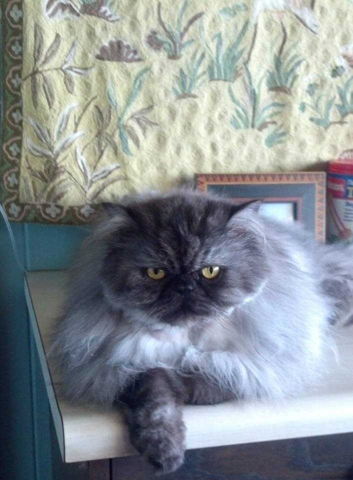 Best Wet Food For Persian Cats