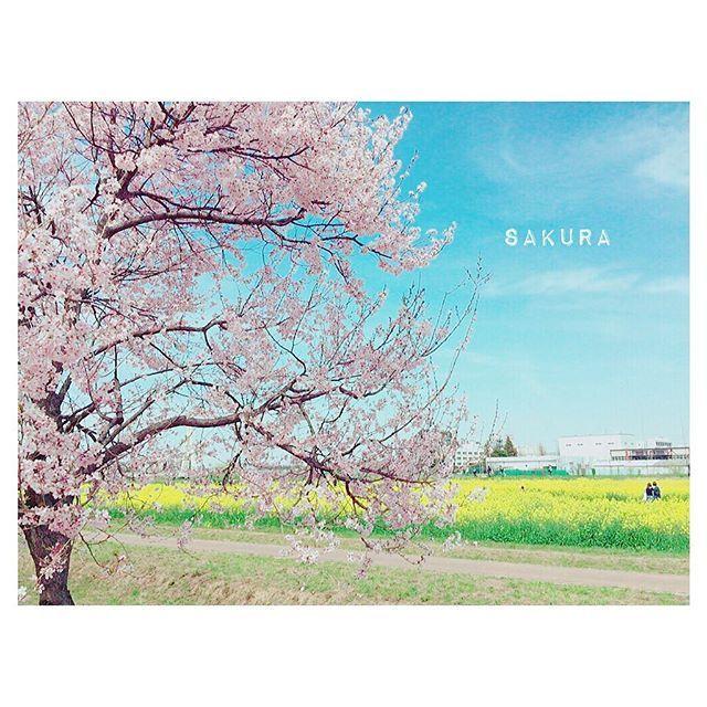 【__mieecha__】さんのInstagramをピンしています。 《2017.1.25 * 寒いので気持ちだけでも暖まるpicを☺🌸 次に桜を見る頃には社会人になってて こんなゆるーい生活はできないんだろなぁ。 幼稚園から将来の夢には看護師って言ってて ついにその夢が叶ってるかもなんだなぁ。 嬉しいのと寂しいのが重なるのが春🌷 * * #国試まであと25日  #看護 #看護師 #nurse #桜 #sakura #spring #カメラ女子 #お洒落さんと繋がりたい  #写真好きな人と繋がりたい  #instagood  #instalike  #instapic》