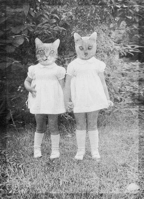 Cat sisters :)