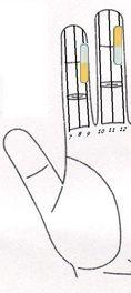 Neuropatía (entumecimiento en la zona del pie) Tratamiento a través Sujok 1 Magnetoterapia  Imán de barra (clavo lateral) Línea nº 9 - amarillo. Imán de barra (clavo lateral) Línea Nº 12 - amarillo.