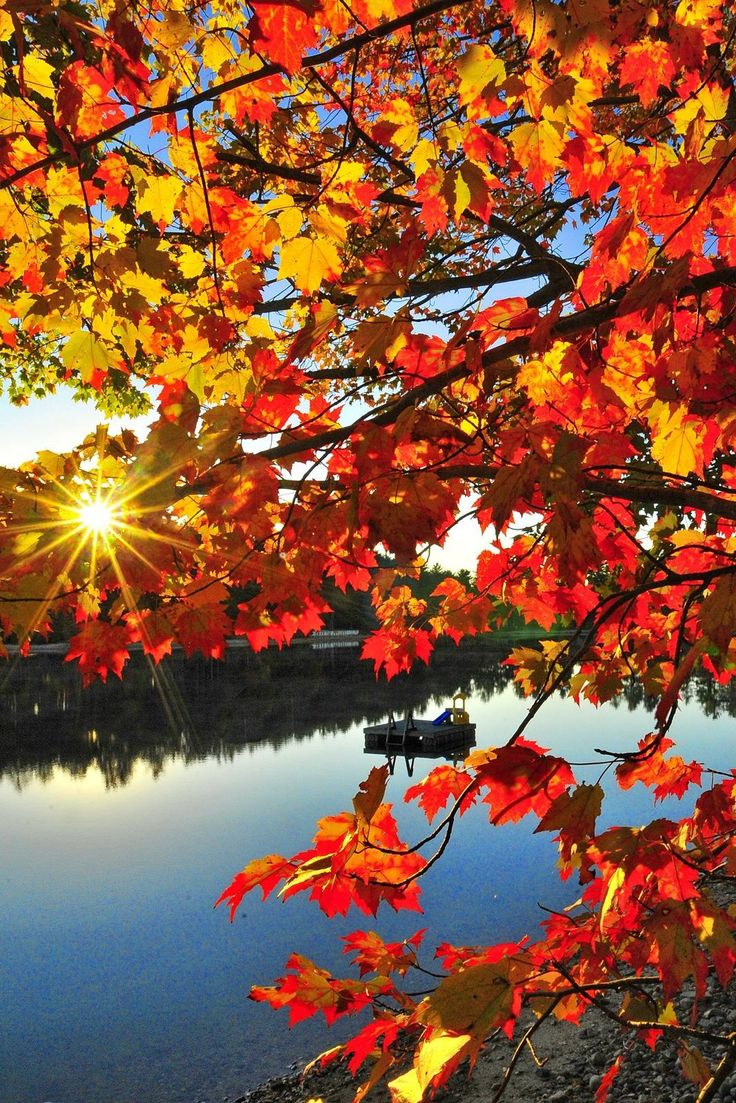 Beautiful Autumn Sunset: 45 Best Fall Harvests Images On Pinterest