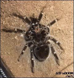 Blog Viiish - Só uma aranha fofa... Mais no bloguitow: http://www.blogviiish.com.br