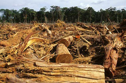 Deforestation facts Deforestation pace 10 Interesting Deforestation Facts-  Deforestation hugely affects rain forests population.