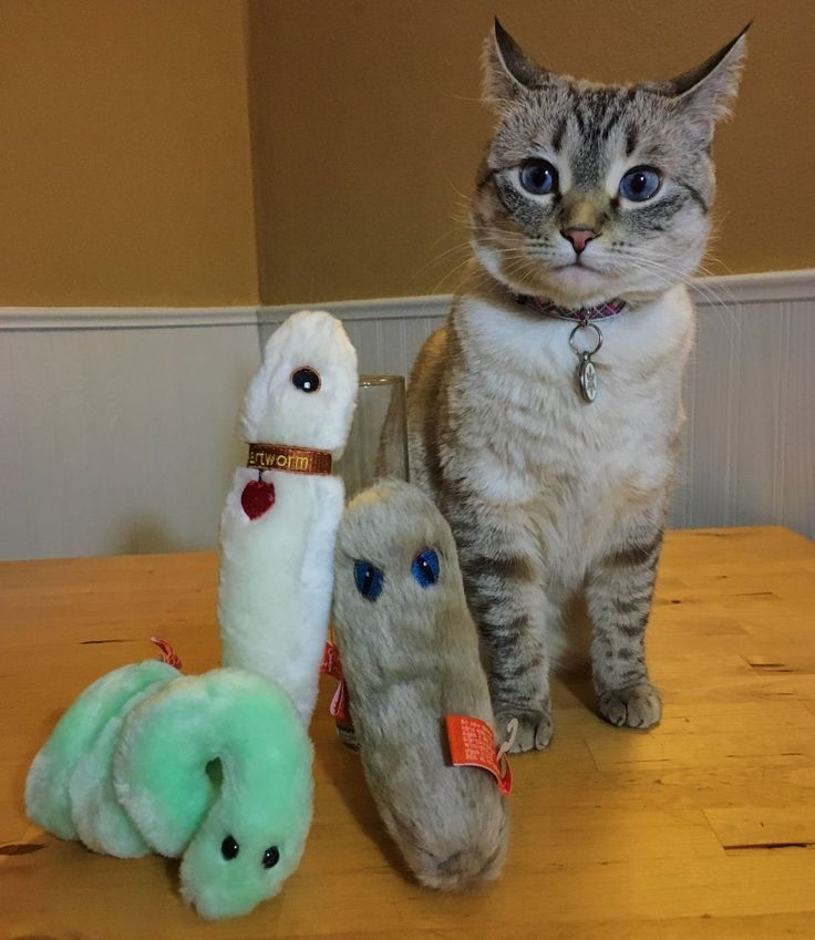 G I V E A W A Y  You voted & my first giveaway has officially begun with a fun vetmed science package from @giantmicrobes! Why these? Well other than being super cute these plush toys are based on actual diseases that cats & dogs can get. (Listed from lef