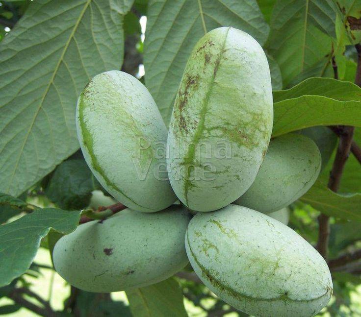 25 beste idee n over fruitboom tuin op pinterest - Deco kleine zithoek ...