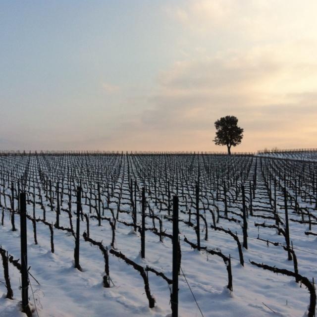Franciacorta's wonderful #italy#wine