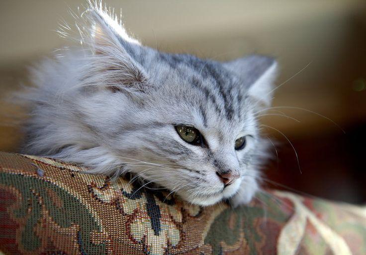 white cat paw
