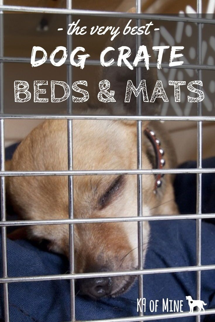 5 Best Dog Crate Beds Pads 2019 Reviews Canine Crate Comfort