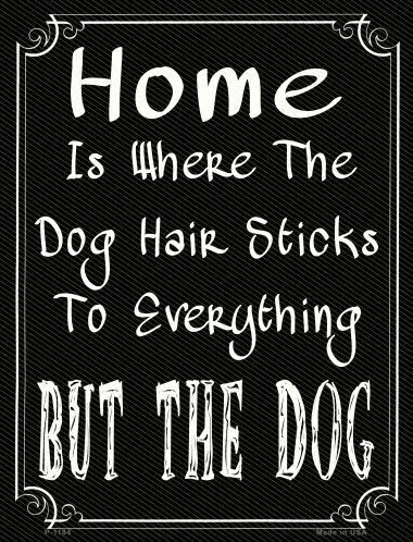 Home Where The Dog 9 X 12 Metal Funny Parking Sign
