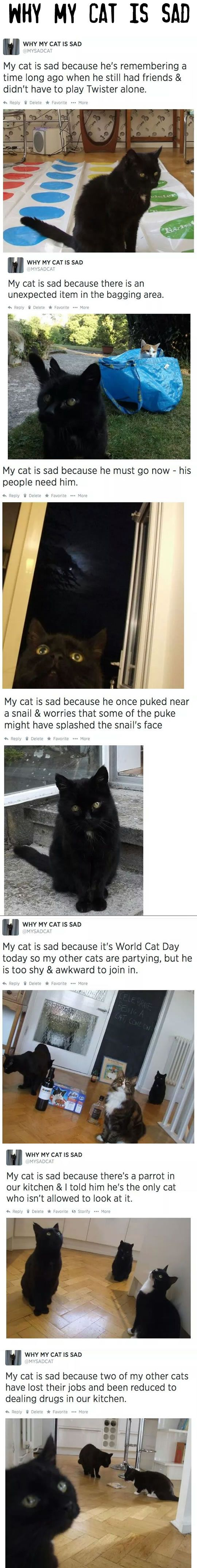 Why My Cat Is Sad.: